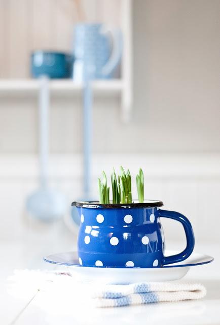 bulbi nella tazza