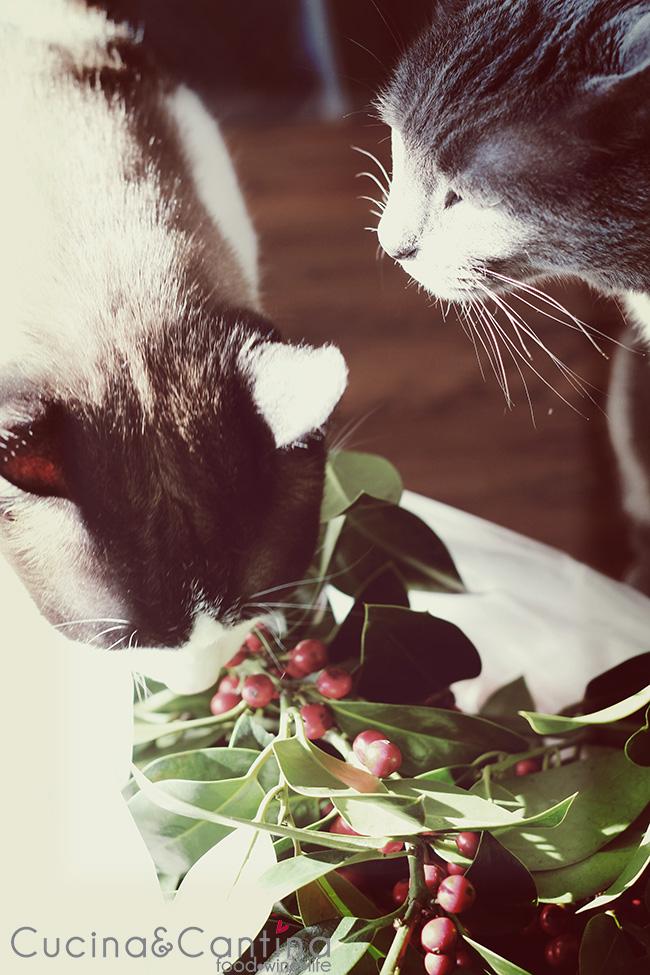 gatti_natale